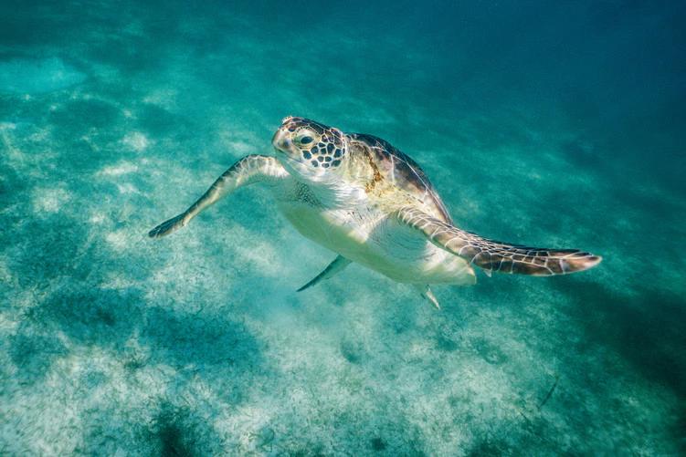 Turtle in Cancun