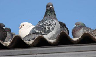 bird control measures