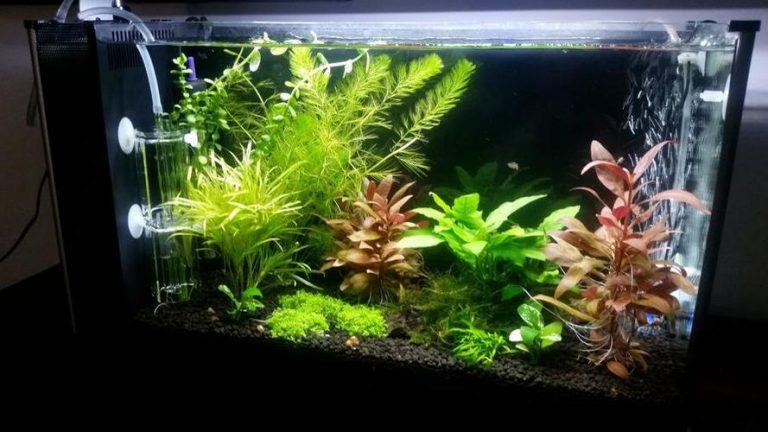 agate Different Types of Aquarium Plants